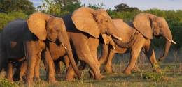 See elephants on our cheap safari to the Selous